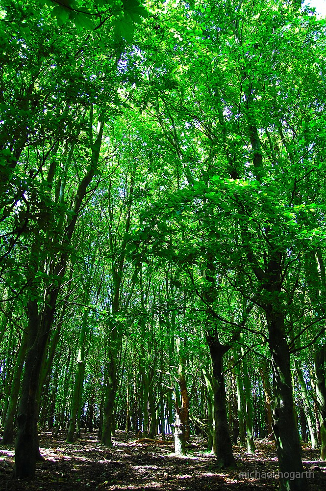 green woods by michael hogarth