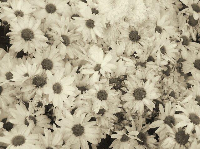 Blanket of Flowers by trin174