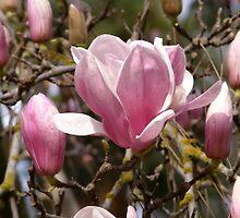 Flower Power  by trin174