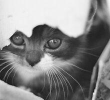 Hiding by Grace Wiggins