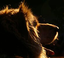 Dog by Patrick Hocker