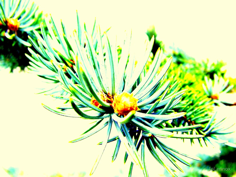 Pine  by JoLennox