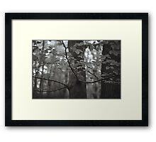 Burnham Beeches Framed Print