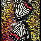 Butterfly Disco by Shelly Still