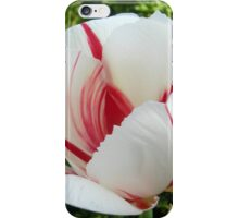 Peppermint Tulip iPhone Case/Skin
