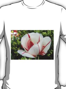 Peppermint Tulip T-Shirt