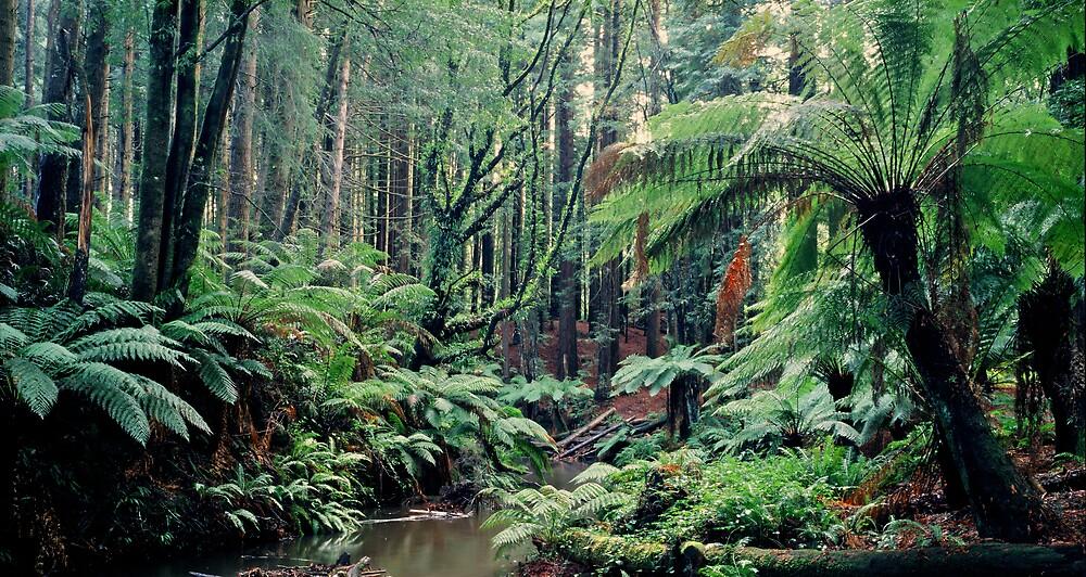 Primordial Redwoods - Cape Otway - Victoria by James Pierce