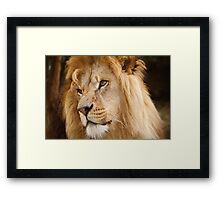 Wild Cats - Male Lion Framed Print