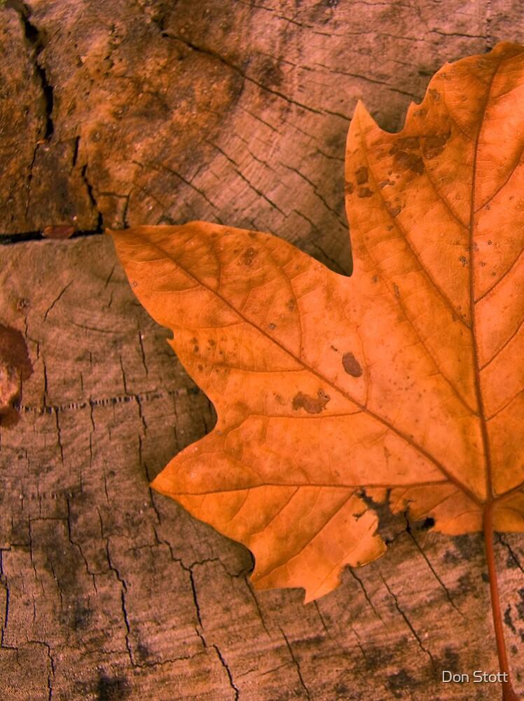 Leaf n Log by Don Stott