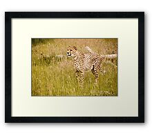 Wild Cats - Cheetah Framed Print