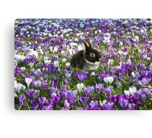 Easter Bunny in the Spring Canvas Print