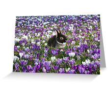 Easter Bunny in the Spring Greeting Card