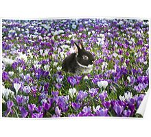 Easter Bunny in the Spring Poster
