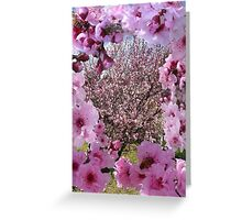 Blossom Beauty Greeting Card