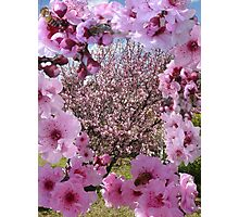 Blossom Beauty Photographic Print