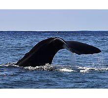 Sperm Whale Fluke Photographic Print