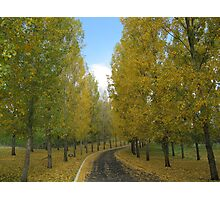 The Yellow Leaf Road Photographic Print
