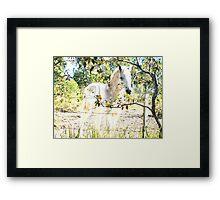 Equine dreams Framed Print