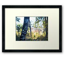 Equine dreams2 Framed Print