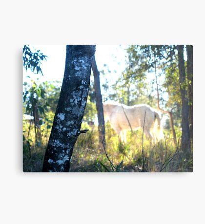 Equine dreams2 Metal Print