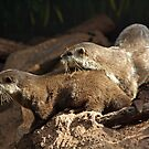 Otters by Furtographic