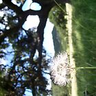 dandelion & tree by CaseyMarie