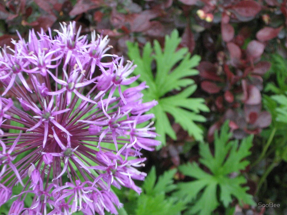 Purple Flower by SooBee