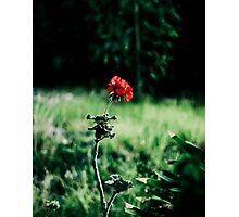 Single Red Flower Photographic Print