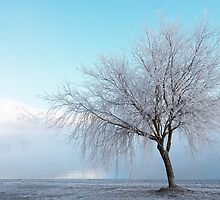 Wanaka Willow by Neil