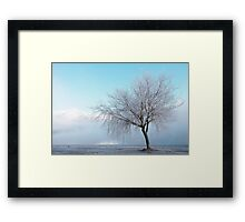 Wanaka Willow Framed Print