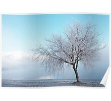 Wanaka Willow Poster