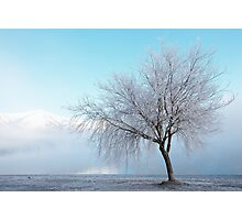 Wanaka Willow Photographic Print