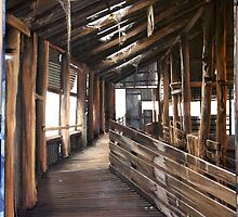 Wool Shed near Penola by anton