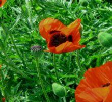 Vivid red poppies Sticker