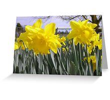 Daffodils in a field Greeting Card