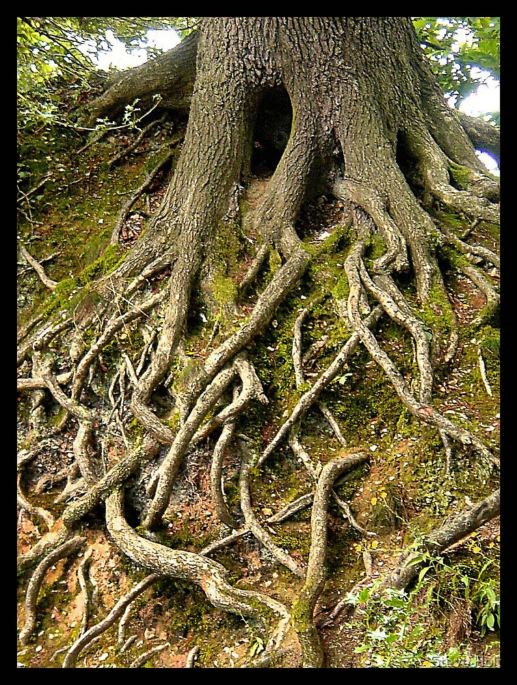 Bare Roots by Steve Holt