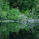 Gordan River No.2 by mindy23