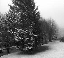 Fir Tree Winter Scene by Nx75