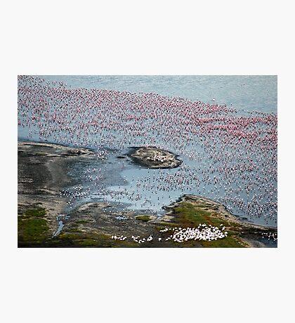 Flamingoes of Lake Nakuru, Kenya. Photographic Print