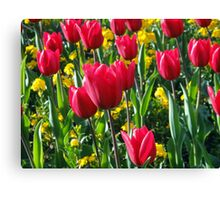 primrose and tulips Canvas Print