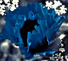 blue poppy by KAREN CUZNER