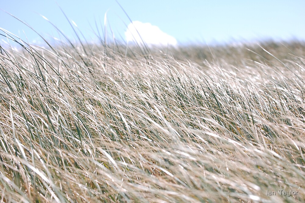 grass  by Ian  Taylor