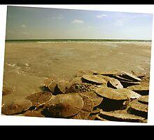 Sand dollars on the Beach 3 by Silly4Idea