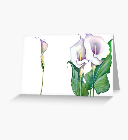 Beautiful flowers of calla Greeting Card