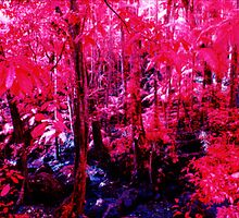 Mt Warning rainforest in infra-red by John C McBain
