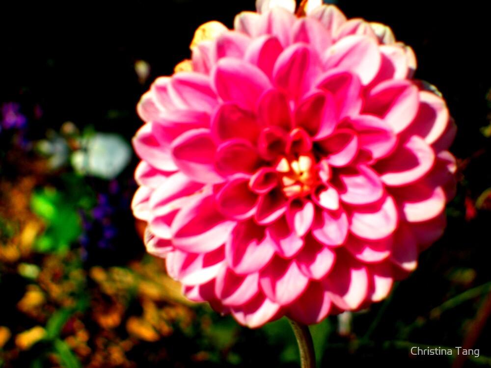 Pink Fibonacci Flower by Christina Tang