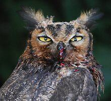 Owl Close-up by John Leeman