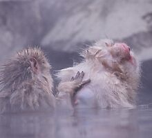 Yudanaka Monkeys, Japan by emmack