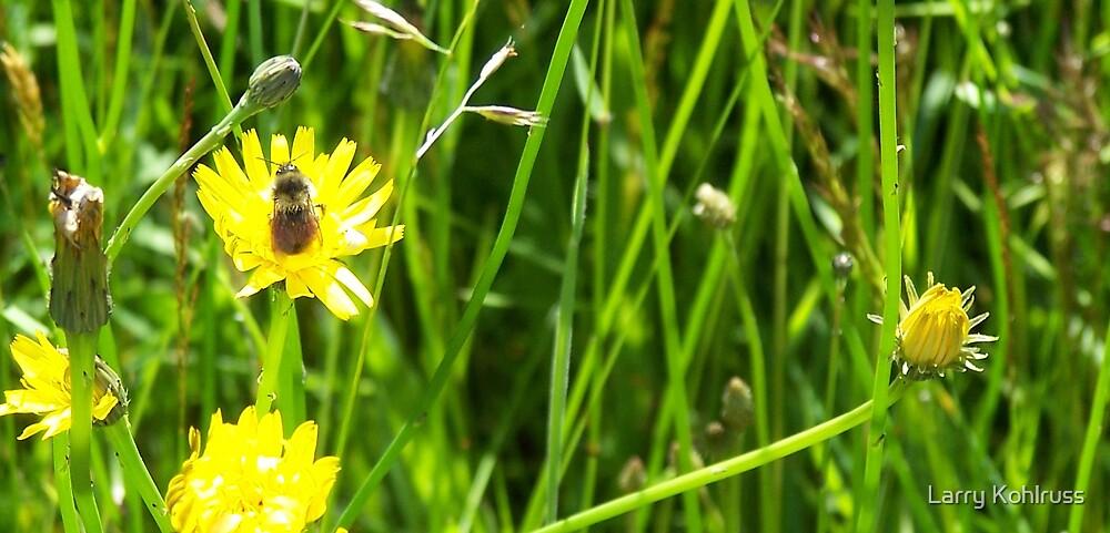 Bee by Larry Kohlruss