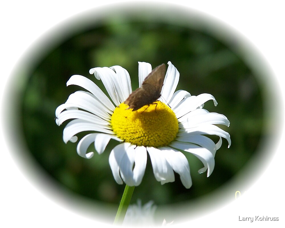 Butterfly. 4 by Larry Kohlruss